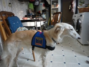 Romeo Service Vest