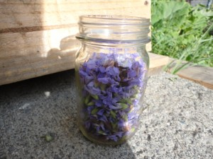 Pint jar full of sage flowers