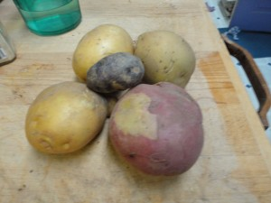 3 yukon golds, one red, and one purple potato