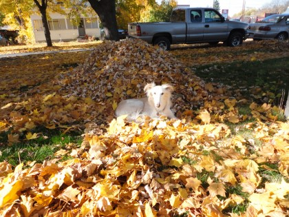Romeo with leaves