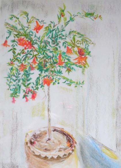 Pomegranate Tree by Maria  Theresa Maggi