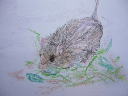 mouse sketch 4