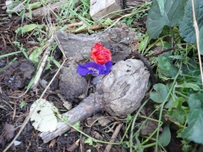 mouse grave