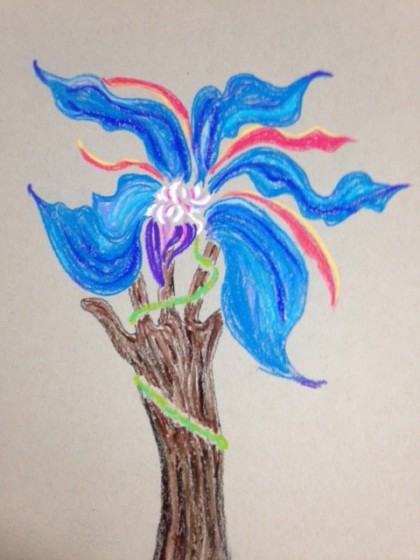 borage flower on tree trunk by MTM