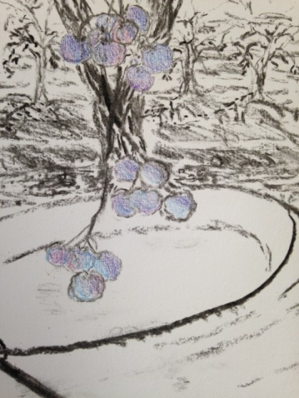 """Memory sketch of blueberries about to get """"tickled"""" into the bucket on Sauvie Island"""