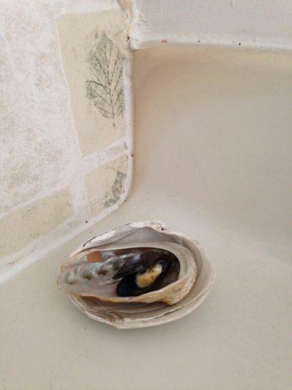 nested-shells