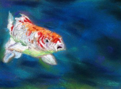 Koi, chalk pastel, by Maria Theresa Maggi