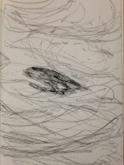"""Whale's Head,"" charcoal pencil memory sketch by Maria Theresa Maggi"