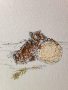 """Squirrel Nibbling Mushroom,"" quick memory sketch, by Maria Theresa Maggi"